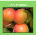 CAIS MAMAIA