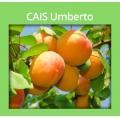 CAIS UMBERTO