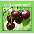 CIRES GERMERSDORF