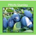 PRUN STANLEY