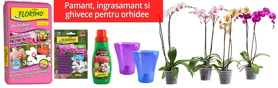 pamant_ingrasamant_ghivece_orhidee_bradu.ro